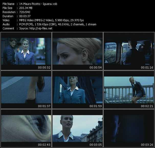 video Iguana screen